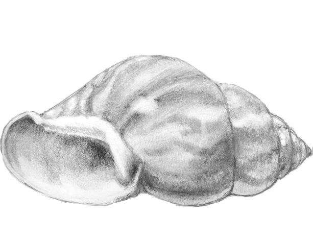 sci_ill_shell
