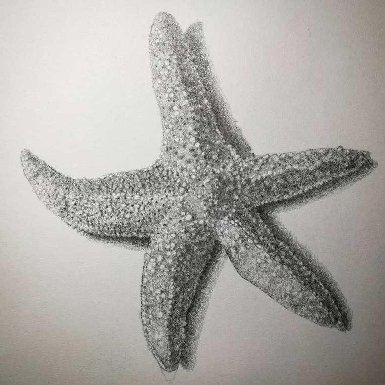 seastar_stippleboard